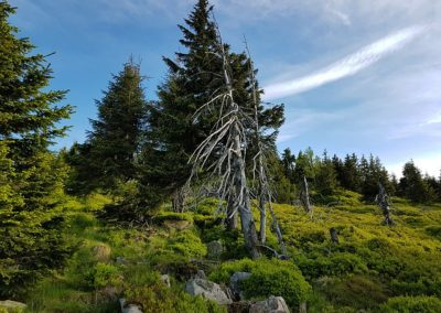 krkonose-giant-mountains-2394917_640